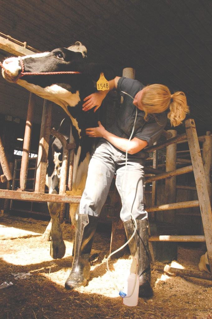 A New Cow Doc in Addison County Bucks a National Vet Trend