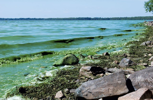 File: blue-green algae on Lake Champlain last year - KATHRYN FLAGG