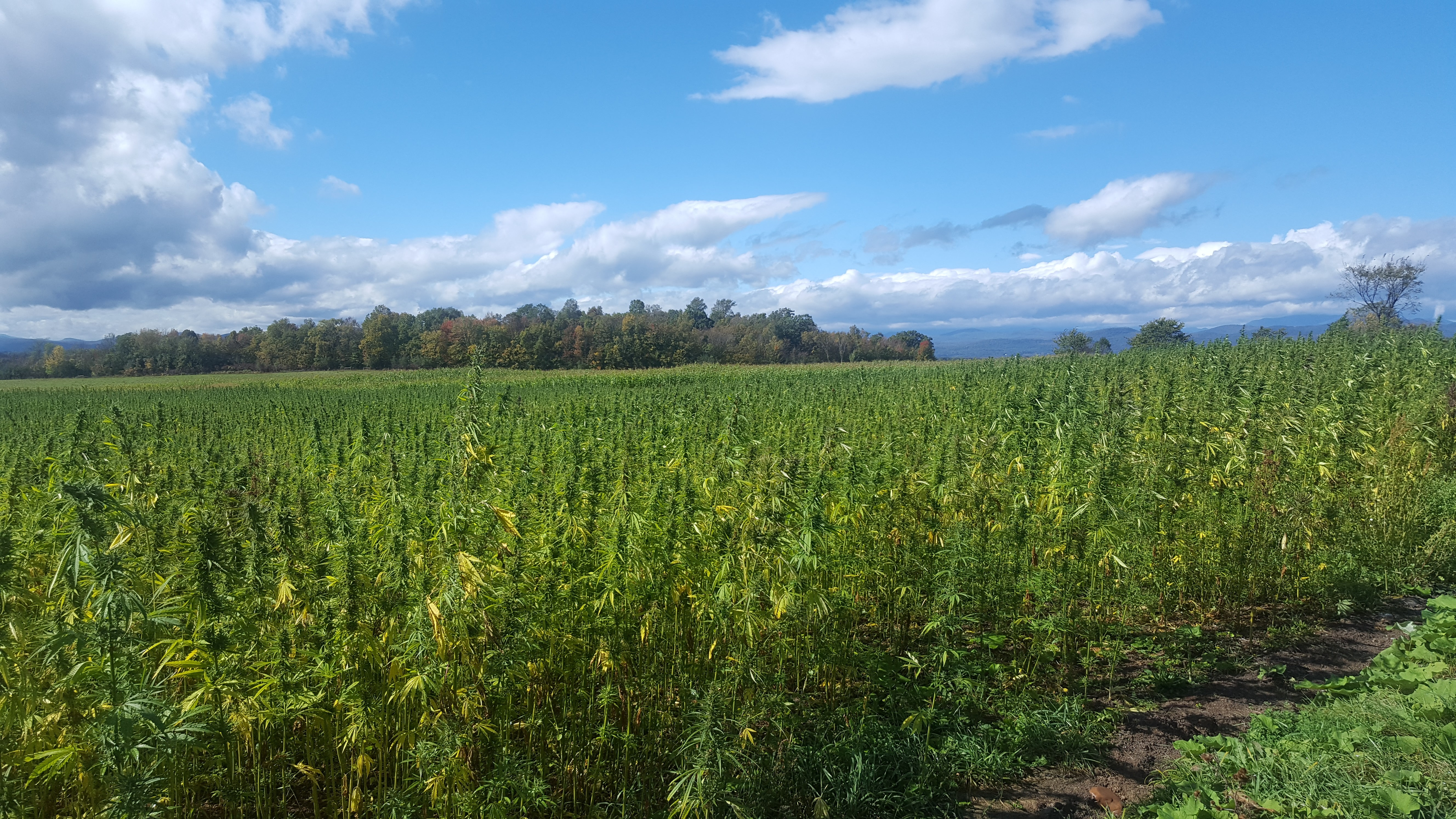 Vermont Hemp Company and Grower Agree to Settle Lawsuit