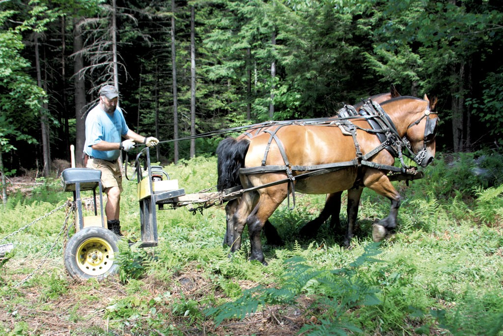 Carl Russell skidding logs on his farm in Bethel - KEN PICARD