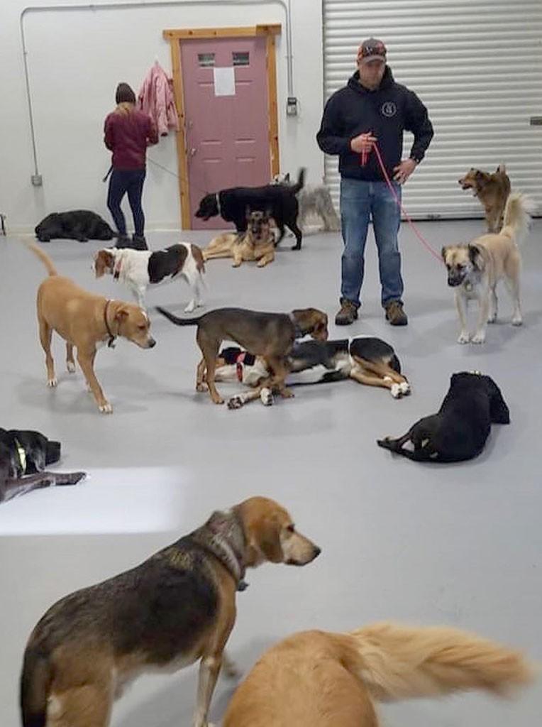 Seven Daysies Awards: Best dog training company, 2019