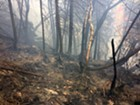 A forest fire in Bolton earlier this month