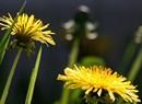 Spring Tonic Medicine Making & Herb Walk
