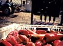 A Mesoamerican Market Hits Waitsfield