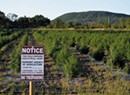 What Are Those New 'Trees' Being Planted in Fields Across Vermont?