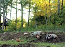 Sugar Mountain Farm Adds On-Site Butchering
