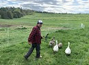 Stuck in Vermont: Gold Shaw Farm Grows YouTube Views in Peacham