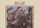 Will Keeper, 'Bear'