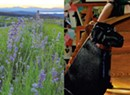 Hit the Road: Lavender Essentials of Vermont, Dog Mountain and Drive-In Movies