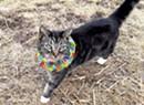 Birdsbesafe Cat Collars Keep Felines From Killing Songbirds