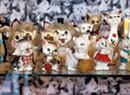 Joe and Jaye MacAskill Open a Feline-Themed Vintage Store in Winooski