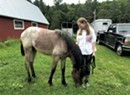 Wheelock Teen to Compete at the Extreme Mustang Makeover in Oklahoma City