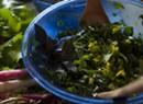 Farmers Market Kitchen: Italian Kale Salad