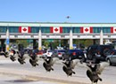 The Parmelee Post: Droves of Vermont Turkeys Immigrate to Canada