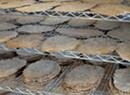Patchwork Farm & Bakery Makes Matzo for Everyday