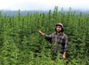Vermont Hemp Farmers Find Fertile Ground in CBD Crop