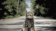 Movie Review: The New 'Pet Sematary' Doesn't Manage to Bury Its Campy Predecessor