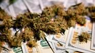 The Cannabis Catch-Up: Money on My Mind
