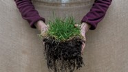 Underground Microorganisms Build Healthy Soil for a Cooler Planet