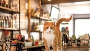 Photo Essay: Workplace Pets to Know Around Vermont