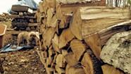 An Aspiring Woodchuck Offers Beginner's Advice on Storing Firewood