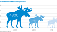 Sharp Decline in Vermont Moose Herd Raises Questions About Hunting