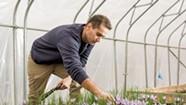 UVM Researchers Tout Growing Saffron in Vermont