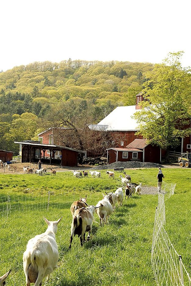 Big Picture Farm