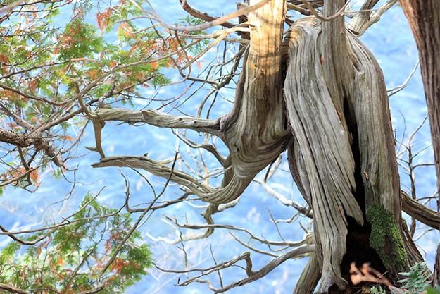 Photos: Terrific Trees