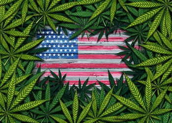 The Cannabis Catch-Up: Weed Wins the Elections