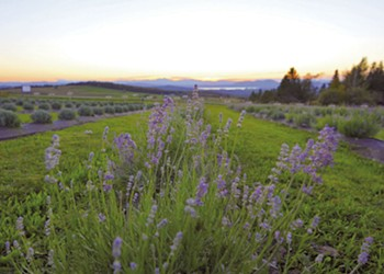 In the Northeast Kingdom, Lavender Essentials of Vermont Grows an Agribusiness