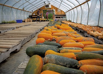 Abenaki Land Link Project Plants Seeds of Food Sovereignty