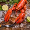 The Cannabis Catch-Up: Getting Lobsters High Is a Thing Now, Apparently