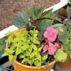 DIY: How to Plant Containers