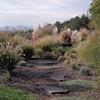 A Landscaper Helps Fix Backyards