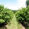 Following the Adirondack Coast Wine Trail