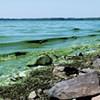 Blue-Green Algae Closes Two Burlington Beaches
