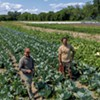 Pitchfork Farm Extends Its Season by Pickling Produce