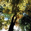 Off Trail: Helen W. Buckner Nature Preserve