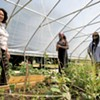 ZAFA Wines and Clemmons Family Farm Collaborate to Lift Up Black Community
