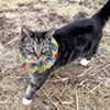 Birdsbesafe Cat Collars Keep Felines From Killing Songbirds