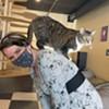 Stuck in Vermont: Kitty Korner Café in Barre Finds Furever Homes for Felines