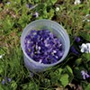 Foraging Flowers for a Sweet Taste of Spring