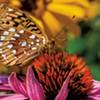 Photo Essay: Photographer Rob Swanson Reveals the Delicate World of Vermont Pollinators