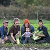 Vermont Chicory Week Celebrates Bitter Greens