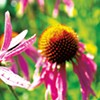 Herbalists Explore Plants and Wellness