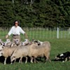 Herding Sheep in Hanover: The Premiere of 'Doggie Hamlet'