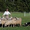 Herding Sheep in Hanover: The Premiere of 'Doggie Hamlet'