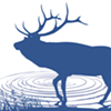 What the Elk? Cervids Escape From Derby Enclosure