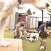 Best pet daycare